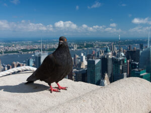 Bird-Friendly Construction Required as of January 10
