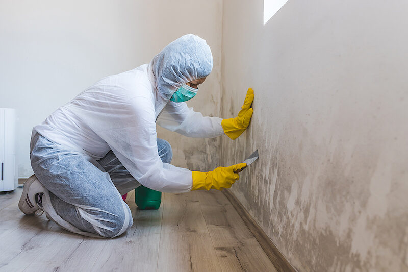 DEP Rule Establishes New Penalty for Certain Mold Violations
